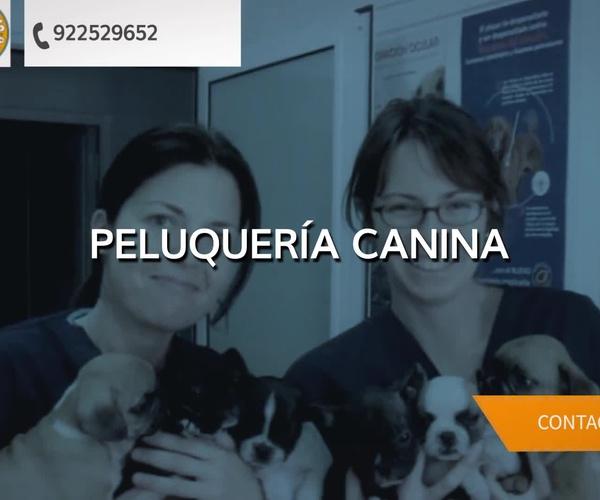 Veterinarios en Puertito de Güímar | Veterinario El Puertito