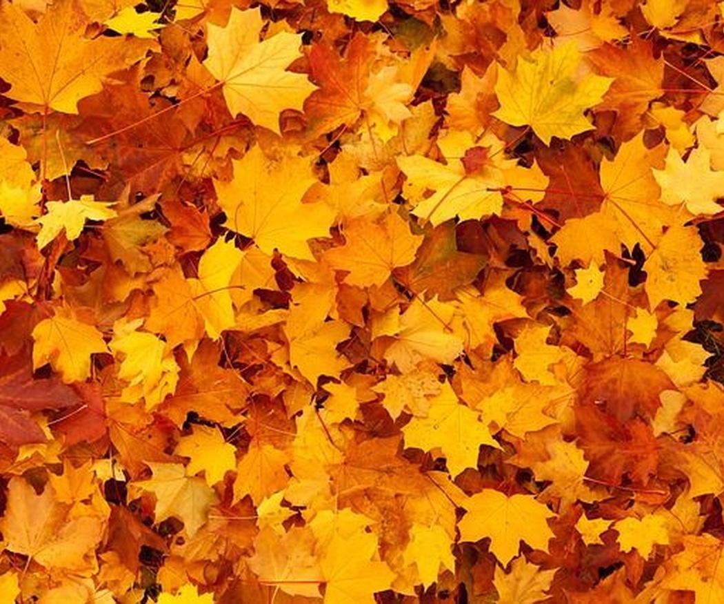 Los cuidados de tu jardín para el otoño