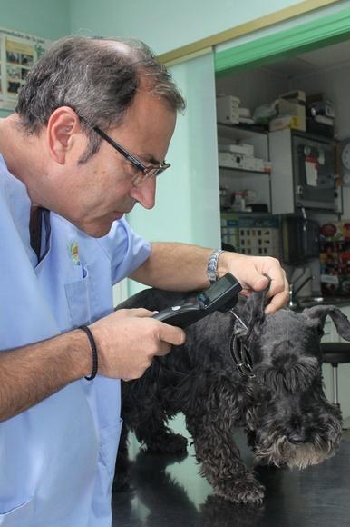 Veterinarios medicina general Zaragoza: Nuestros Servicios de Argos Clínica Veterinaria