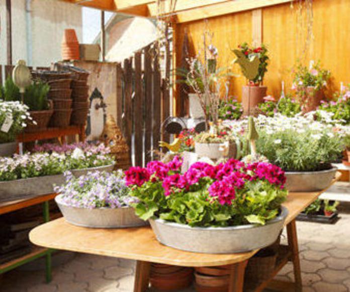 Decoración de jardines: Catálogo de Indoor Garden
