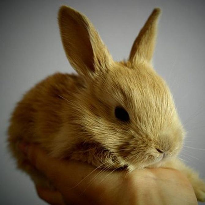 Enfermedades más comunes en conejos domésticos