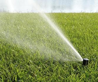 Aplicación de productos fitosanitarios: Servicio de Verderalia Jardinería