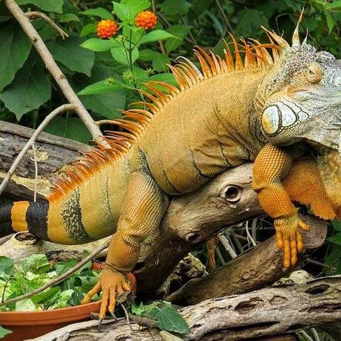 Cuidados de los reptiles