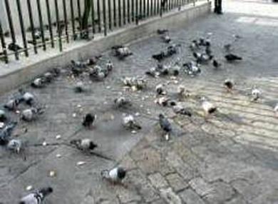 Madrid recibe 5000 avisos al año por plagas