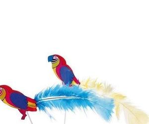 Loros de plumas