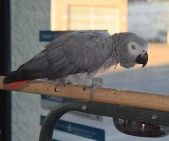 Clínica veterinaria: Servicios de Megamascotas