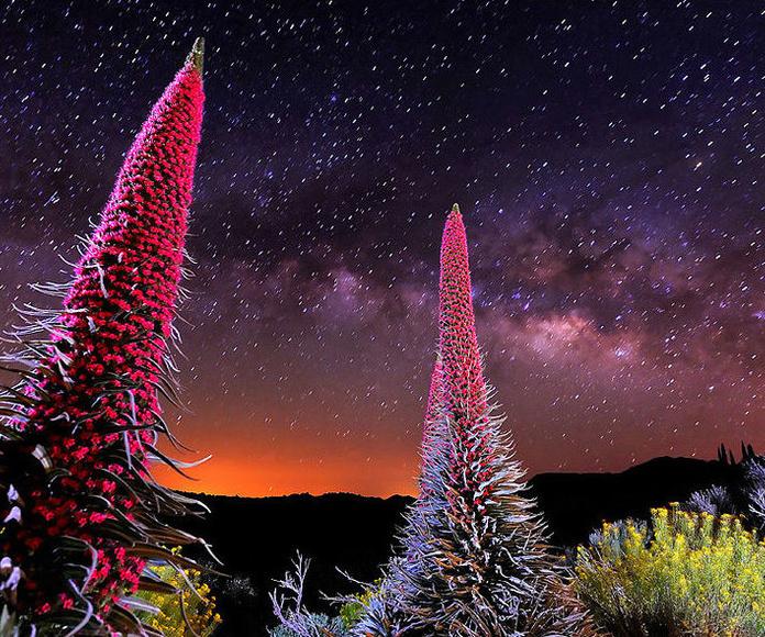 Visita a los tajinastes rojos: Servicios de Turismo en Canarias