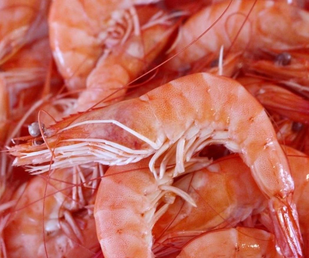 Pescado y marisco, alimentos muy saludables