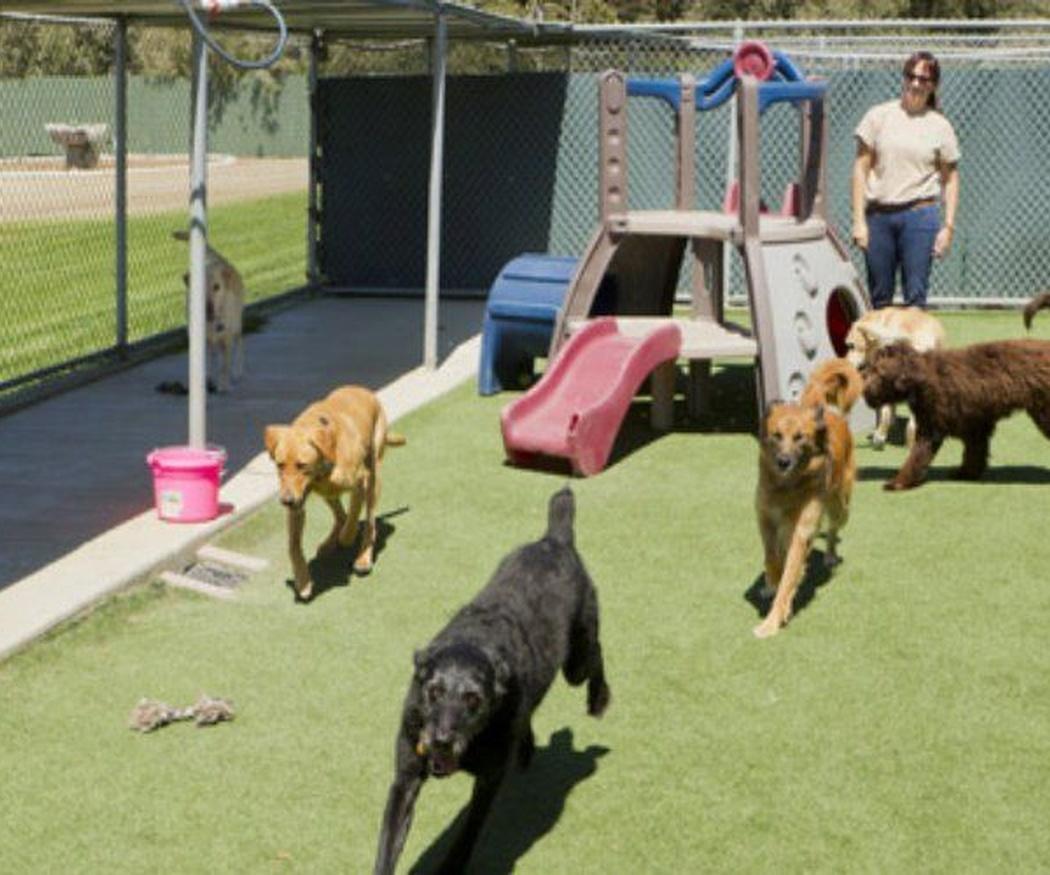 Prevenir el golpe de calor en perros