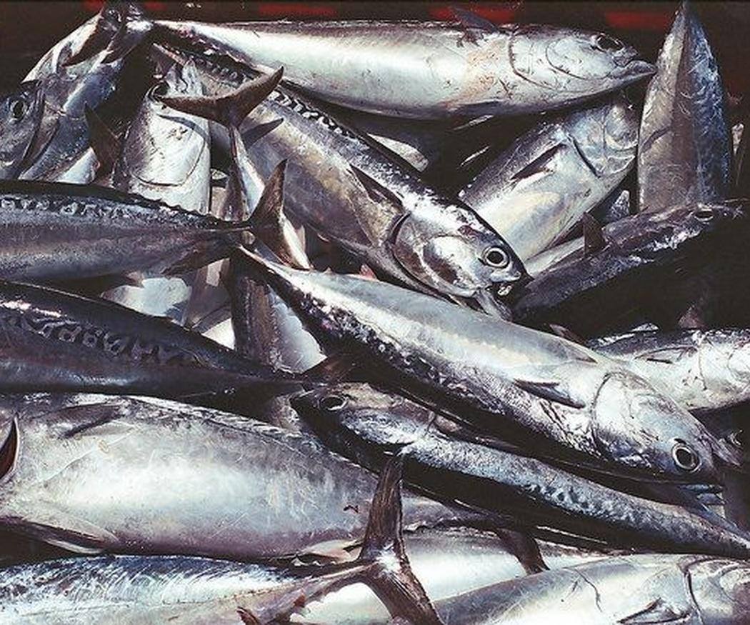 Cuántas veces a la semana hay que comer pescado