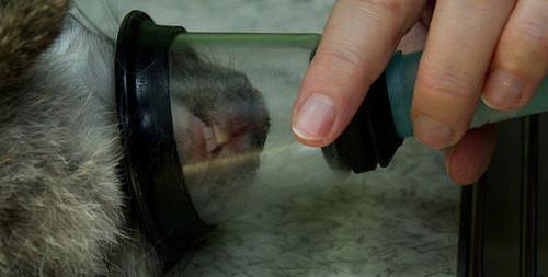 Clínica veterinaria en Huelva