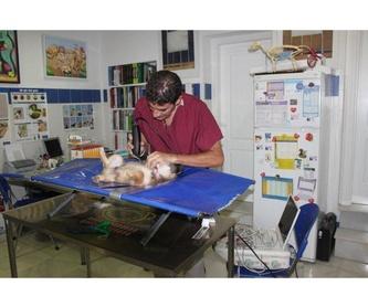 Diagnóstico por imagen: Servicios de Clínica Veterinaria Fábula