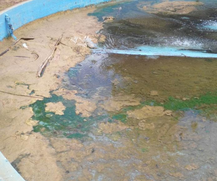 Limpieza de fuentes municipales: Servicios de Limpiezas Miguel 24H