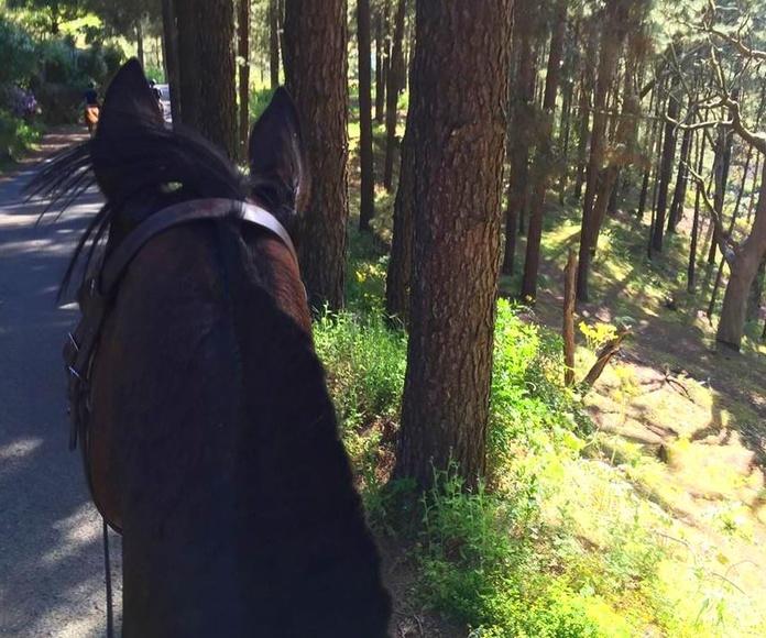 Excursiones para jinetes y amazonas con experiencia