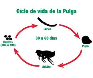 Tratamiento de pulgas
