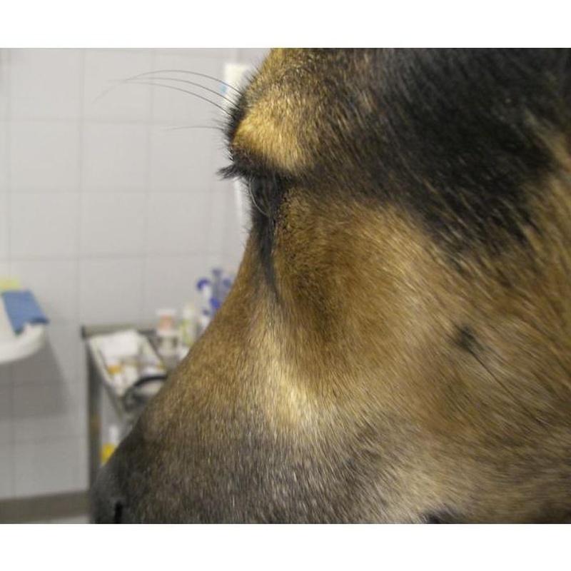 Oftalmología : Servicios  de Hospital Veterinari de Sabadell