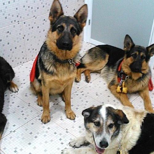 nuestros amigos clínica veterinaria en Almazora