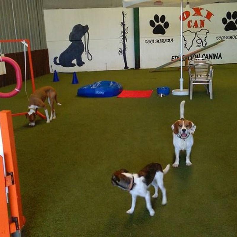 Cursos de Obediencia: Servicios de Centro Canino Oxican