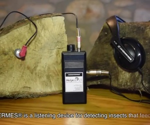 AUDIOTERMES 3.0. BEST ACUSTIC DEVICE IN TERMITES DETECTION.
