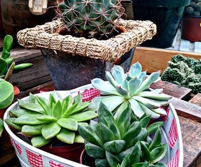 Plantas de interior: NUESTROS PRODUCTOS de Mofusa