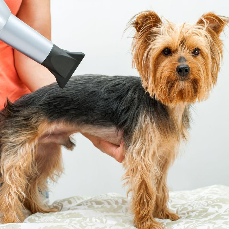 Peluquería: Servicios de Shira Mascotas