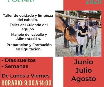 Doma de Caballos: Servicios de Fran Arenas Doma Clásica