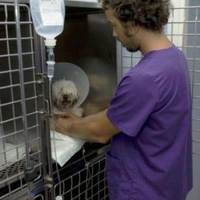 Hospitalización de día: Catálogo de Clínica Veterinaria Jaira
