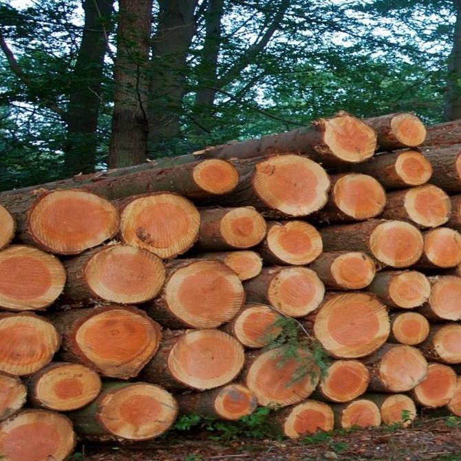 Motivos para vender tu madera