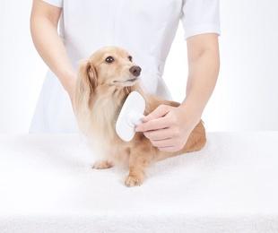 Beneficios de llevar a tu perro a una peluquería canina