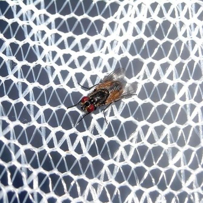 Consejos para evitar picaduras de mosquito en verano
