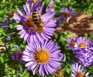 La importancia de la poda para tu jardín