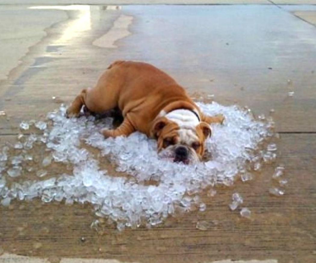 El golpe de calor en los perros