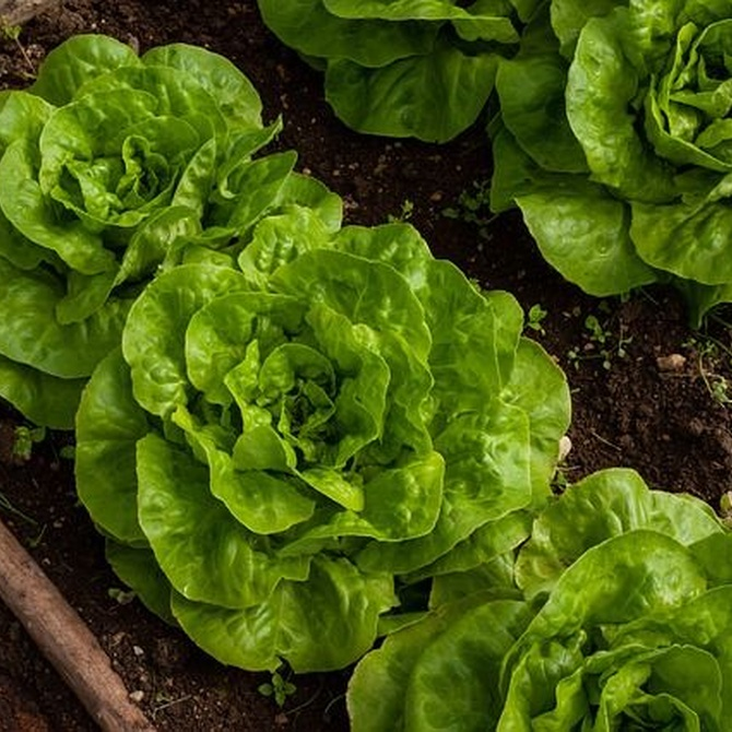 Maximiza tu huerto con el sistema de rotación de cultivos