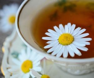 Homeopatía y Naturopatía