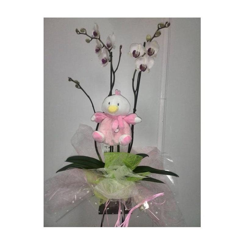 Orquídea nacimiento niño/niña si maceta: Catálogo de FLORISTERÍA JOMACO  Tanatorio As Burgas