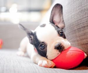 El primer día de tu perro en casa