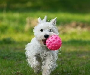 Pelotas especiales para el juego de los perros