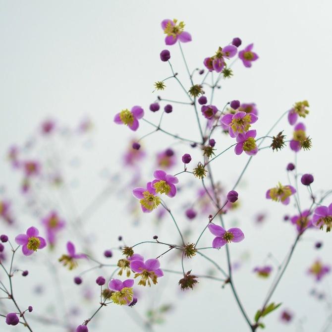 Beneficios de las aguas florales