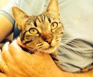 Especialistas veterinarios para el tratamiento de sus mascotas en Madrid