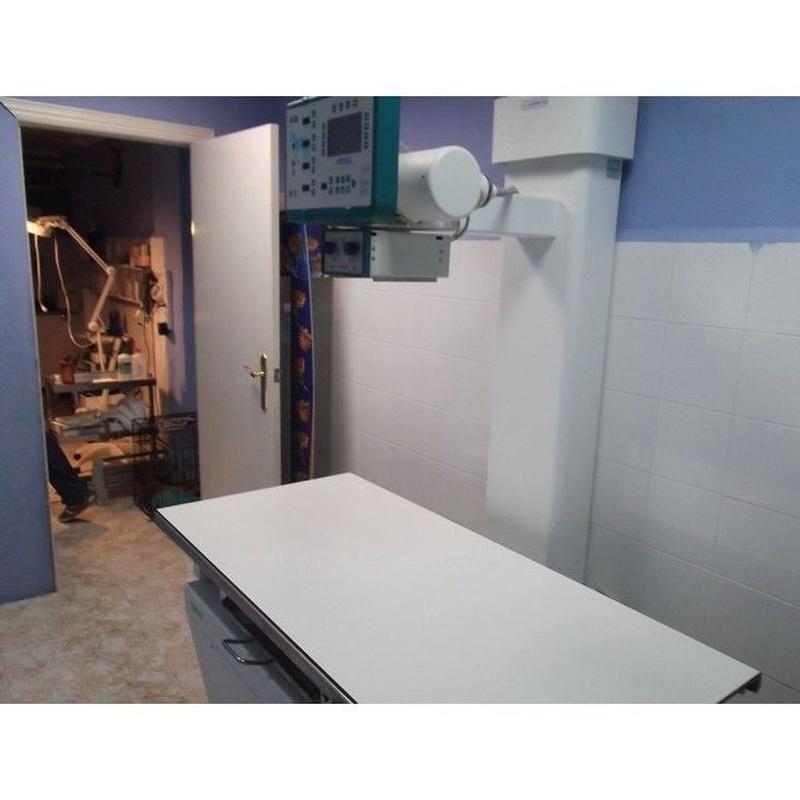 Rayos X y ecografías: Servicios de Clínica Veterinaria Vilavet