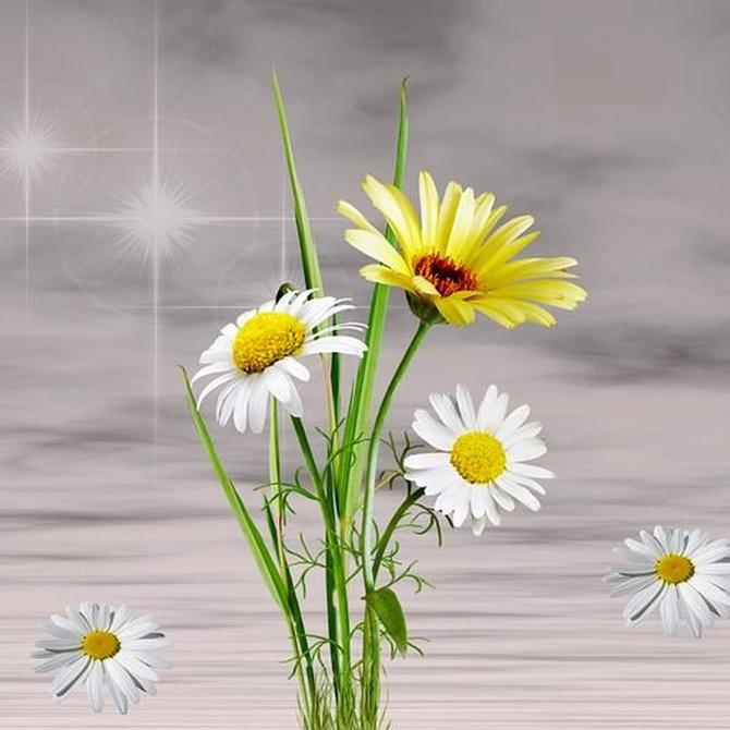 Las flores para regalar, significados y situaciones