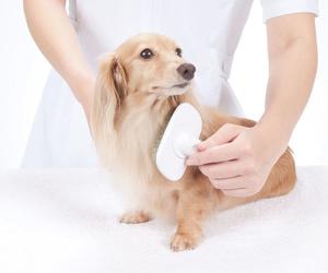 Cursos de peluquería canina en Fuenlabrada (Madrid)