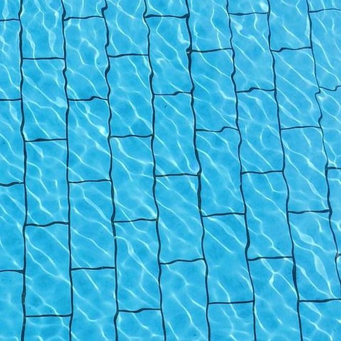 El origen de las algas en las piscinas