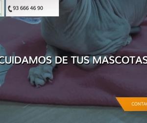 Clínica veterinaria en Sant Feliu de Llobregat | Clínica Veterinaria Vilaplana