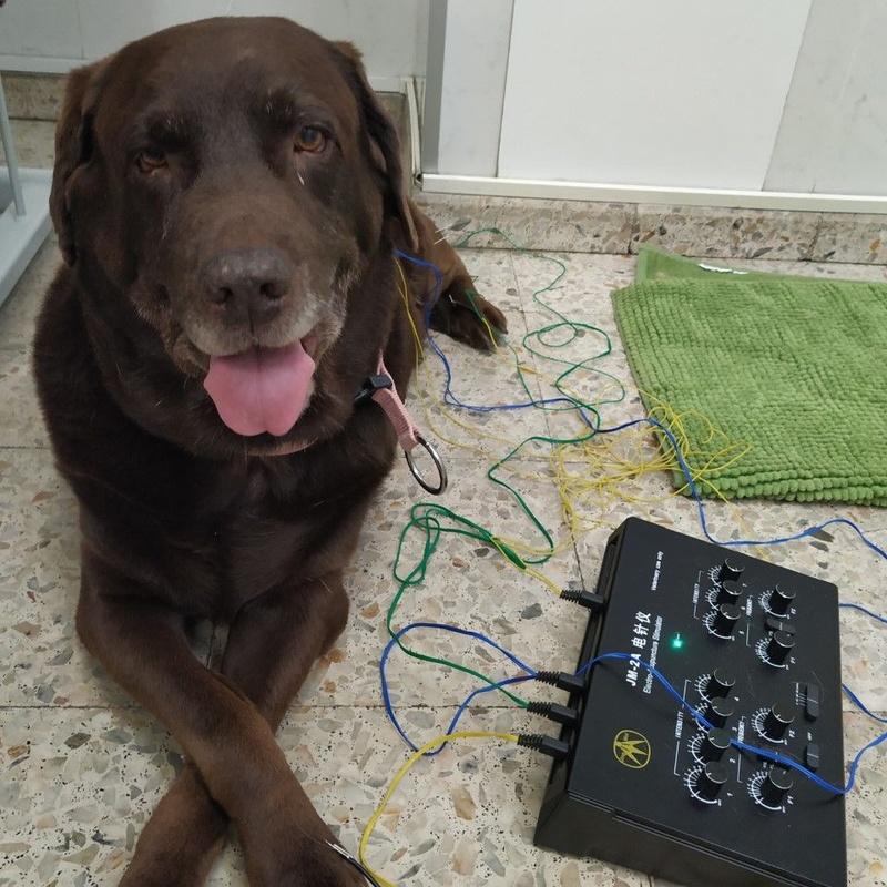 Servicio de acupuntura: Servicios de Clínica Veterinaria Dog And Cat