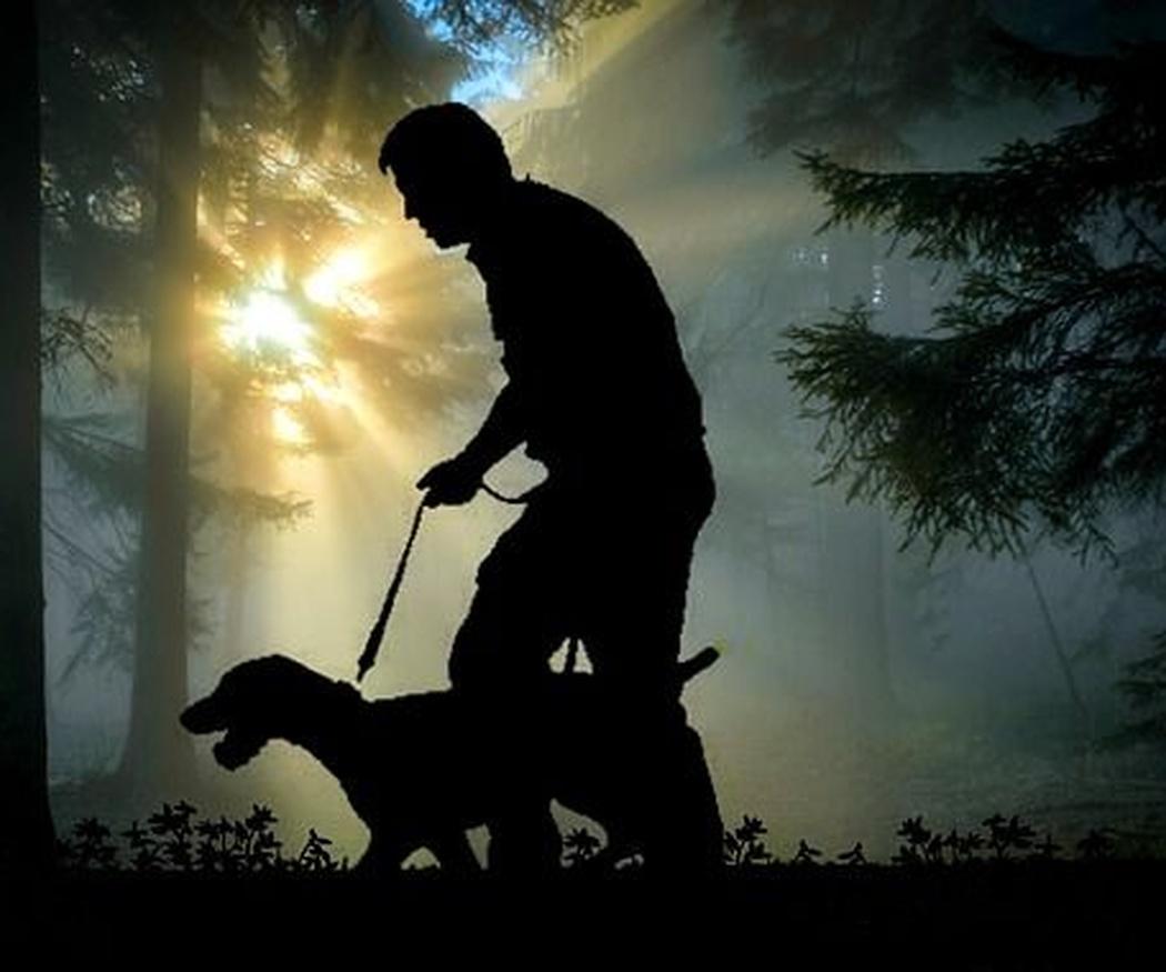 Consejos para usar la correa con tu perro