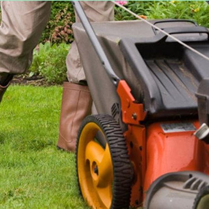 Cómo mantener el jardín