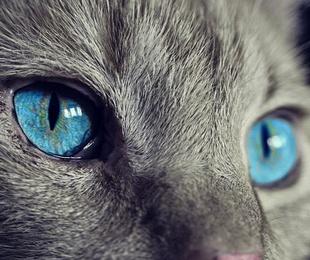 Formas que tu gato tiene de decirte que te quiere