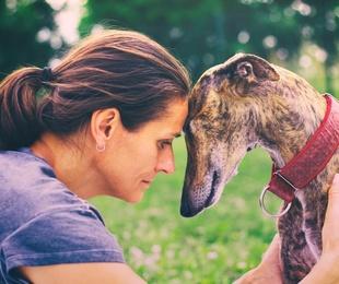 Asesoramiento veterinario integral