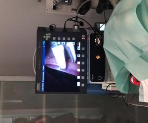 Esterilización de una perra por técnica de laparoscopia en centro veterinari huellas